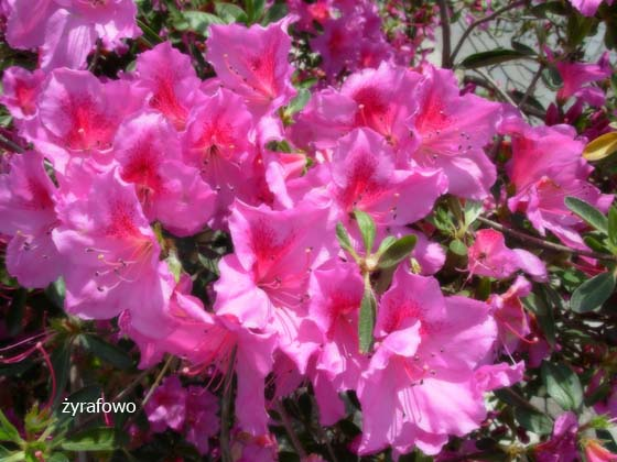 kwiaty_24