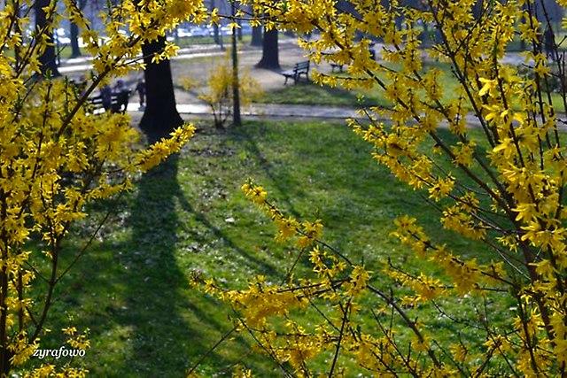 wiosna 2014_23