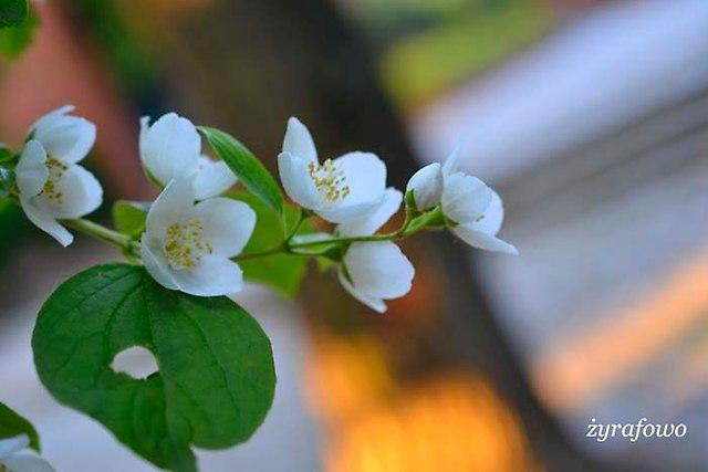 wiosna 2014_163