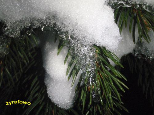 zima 2010_42