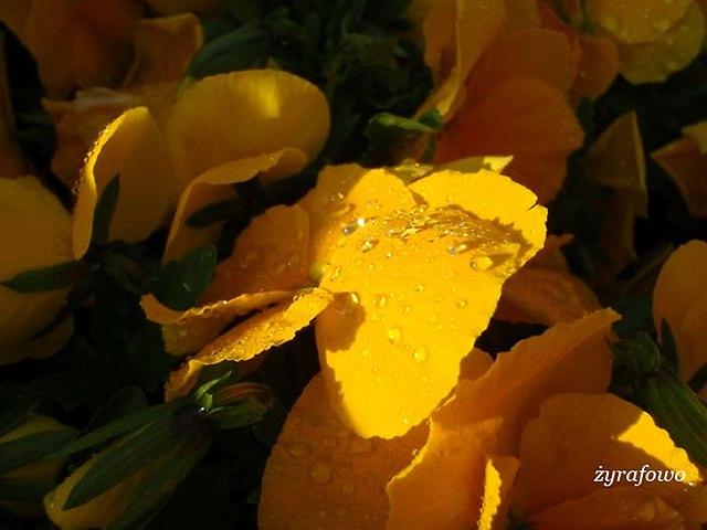 wiosna 2014_79