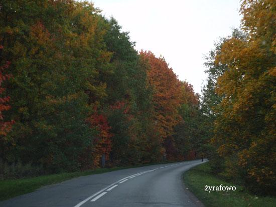 jesienna droga_02