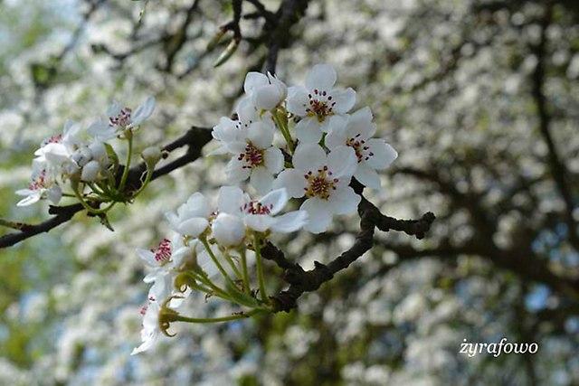 Wielkanoc 2014_60