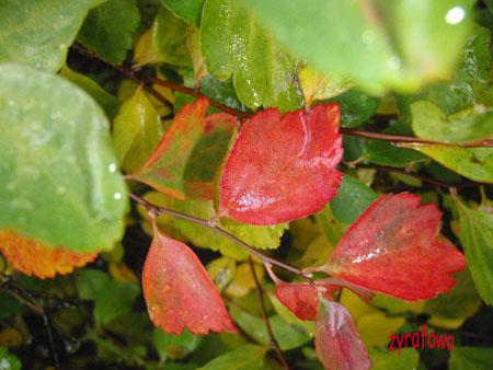 jesien 2009 01