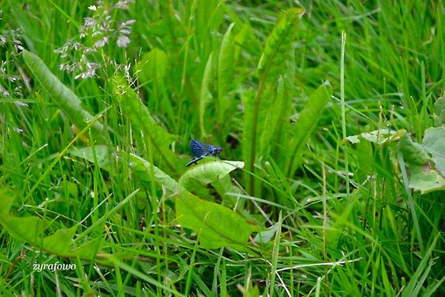 co w trawie piszczy_01