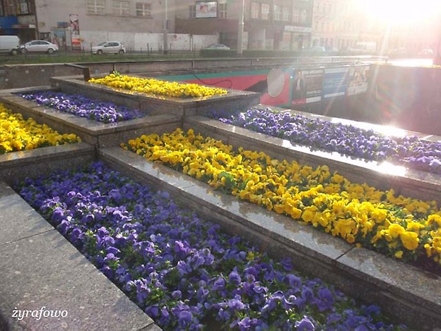 wiosna 2014_89