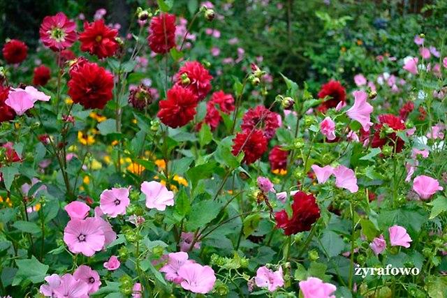 kwiaty 2012_42