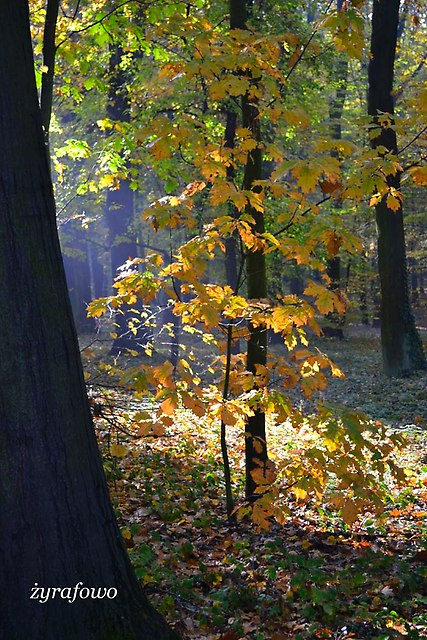 jesien 2012_59