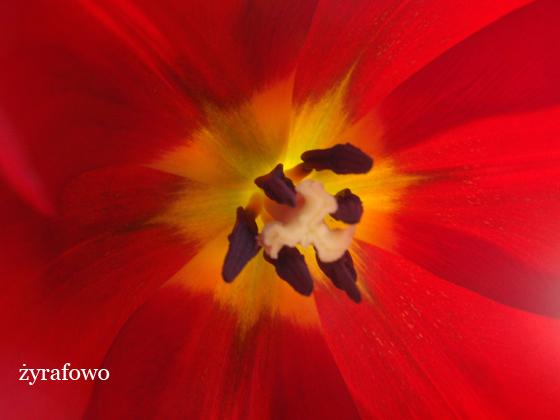 kwiaty_08