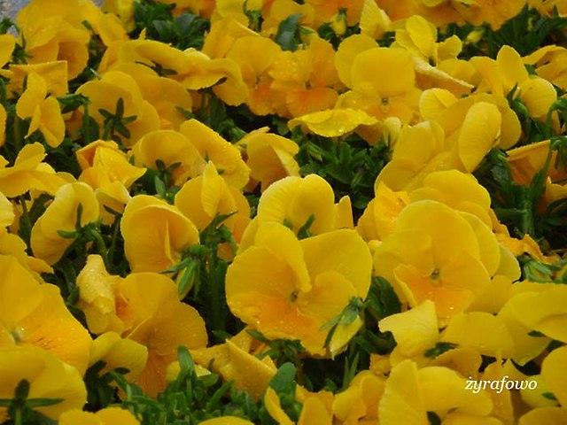 wiosna 2014_88