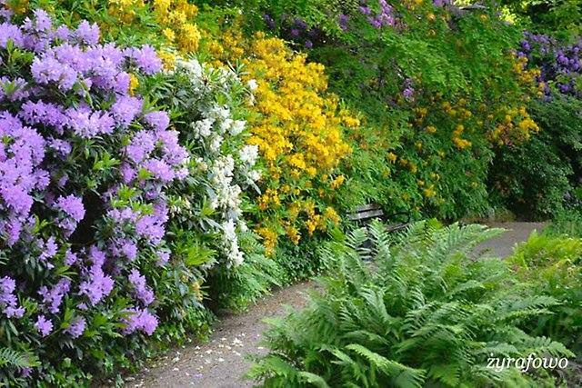Ogrod Botaniczny_08