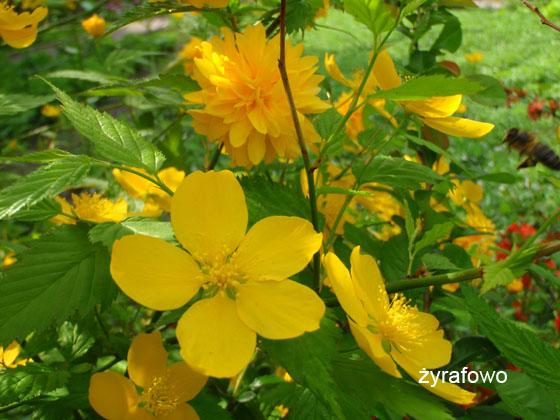 wiosna 2011_91