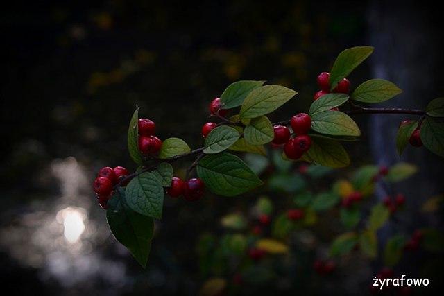 jesien 2014_49