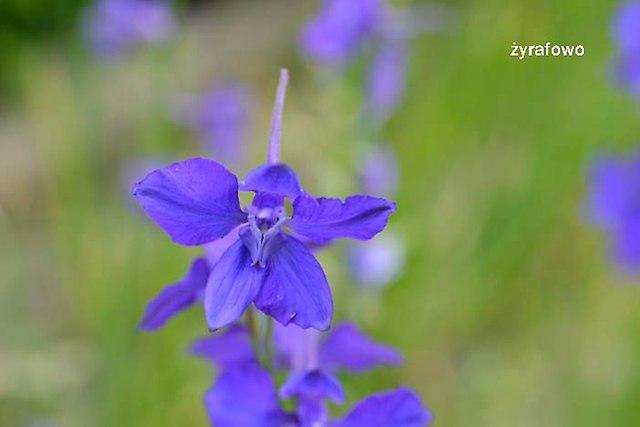 kwiaty 2012_21