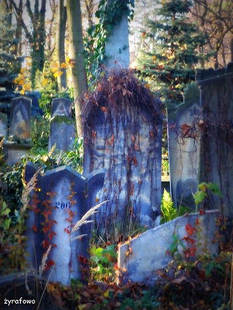 Cmentarz Zydowski_23