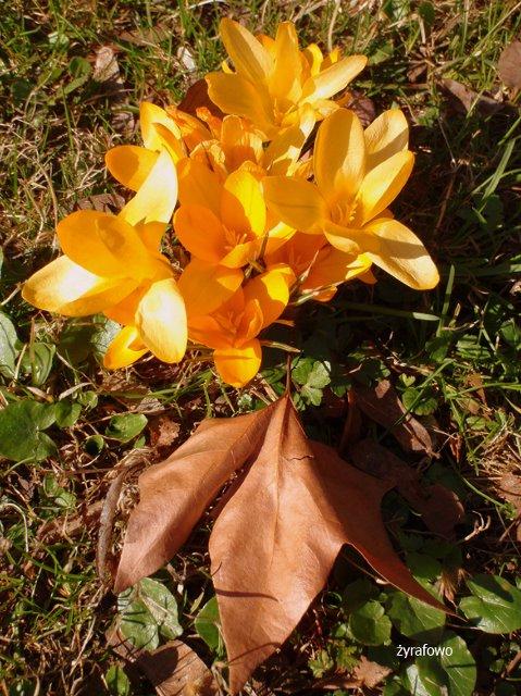 wiosna 2012_06