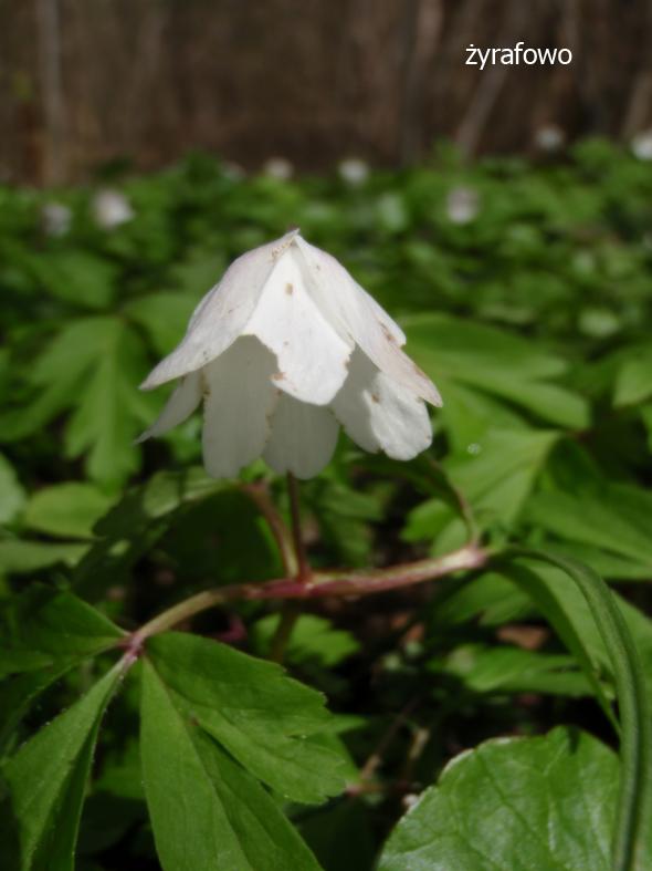 wiosna 2012_40