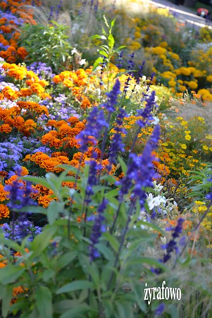 kwiaty 2012_41