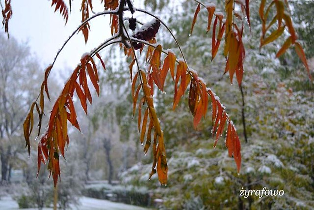 jesien 2012_189