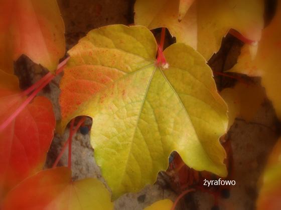 jesien 2011_25