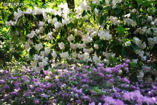 Ogrod Botaniczny_02