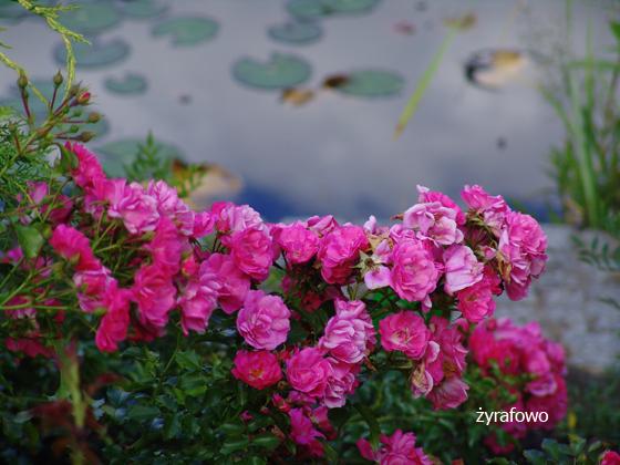 Ogrod Botaniczny 2011.08_03