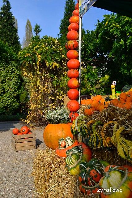 Ogrod Botaniczny 2014_25