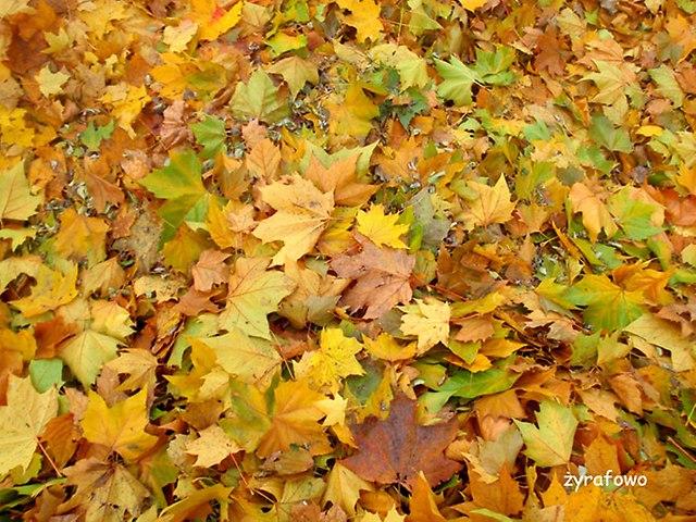 jesien 2014_40