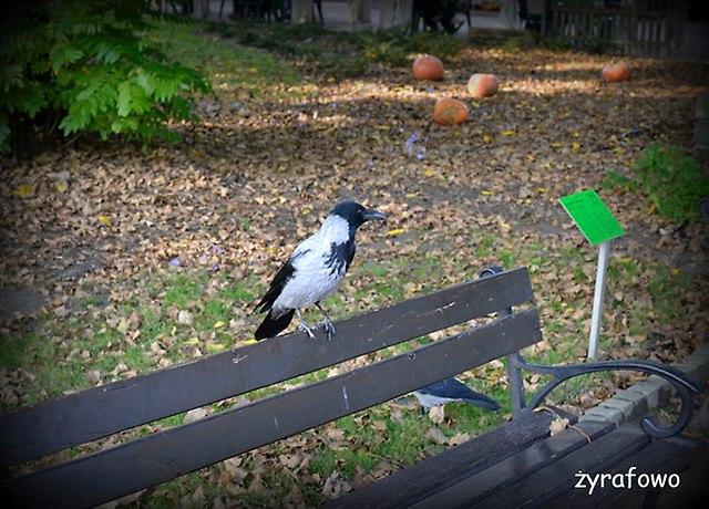 Ogrod Botaniczny 2014_43