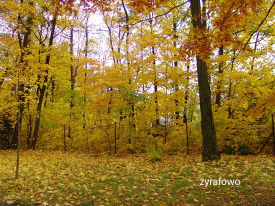 jesien 2010_35