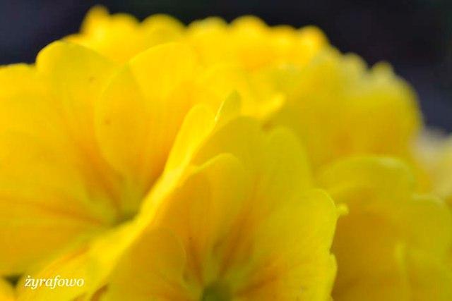 wiosna 2014_05
