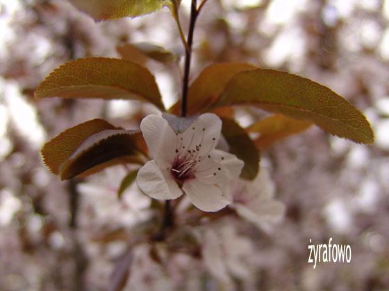 wiosna 2011_43