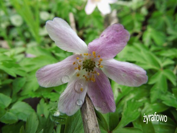 wiosna 2012_30