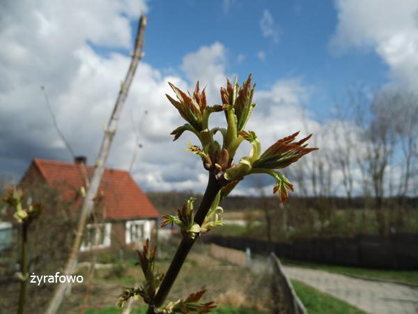 wiosna 2012_31