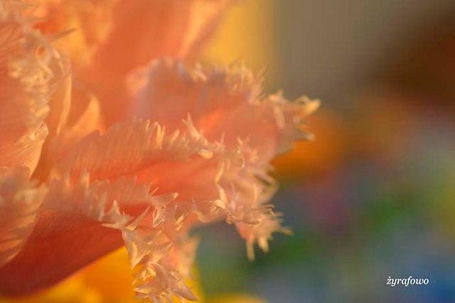 kwiaty 2014_05