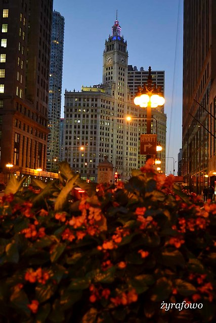 Chicago 2014_44