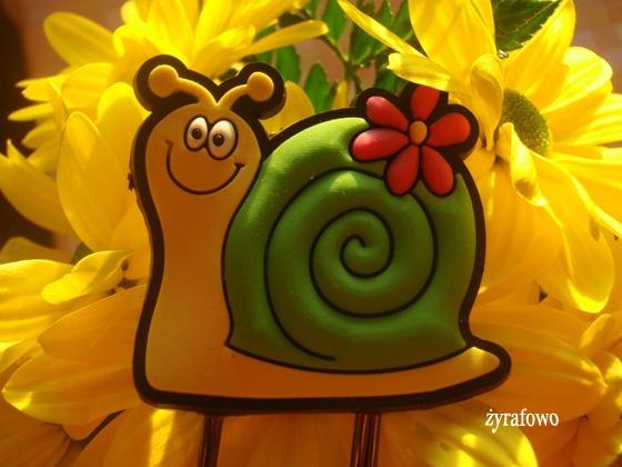 kwiaty_07