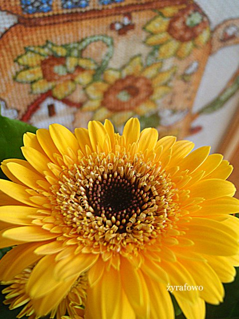 kwiaty_06