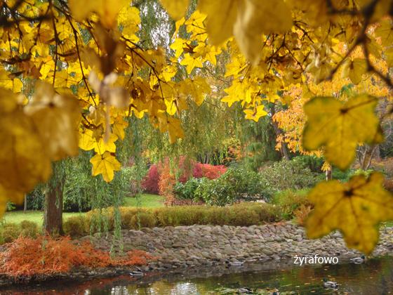 jesien 2011_30