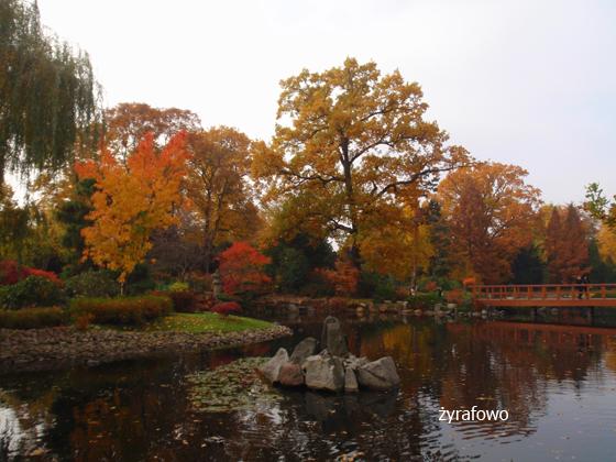 jesien 2011_29