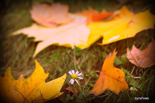 jesien 2014_24