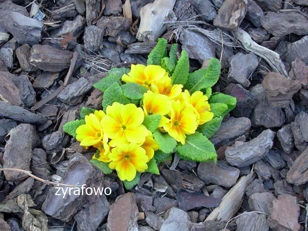 kwiaty_29