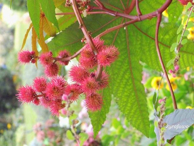 Ogrod Botaniczny 2012_08