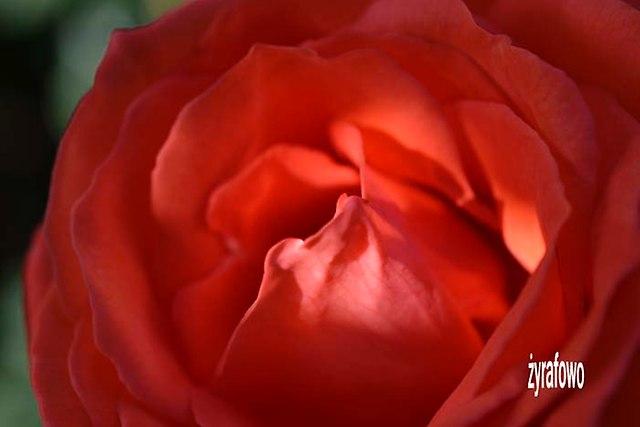 dzialka 2012_07