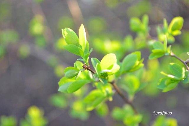 wiosna 2013_09