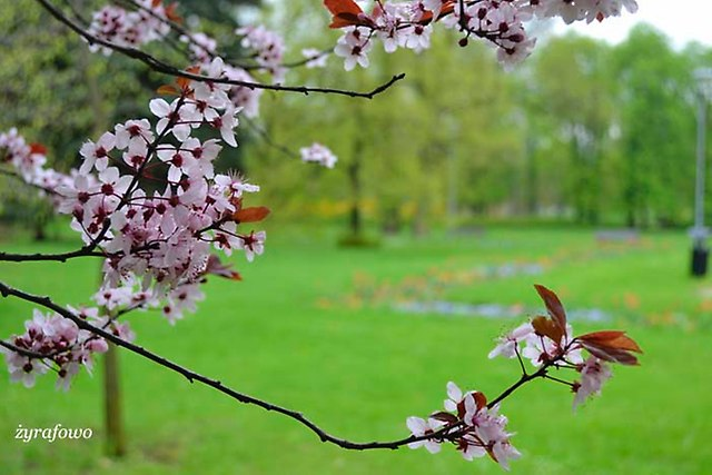 wiosna 2013_146