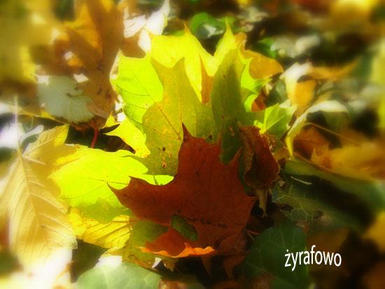 jesien 2010_31