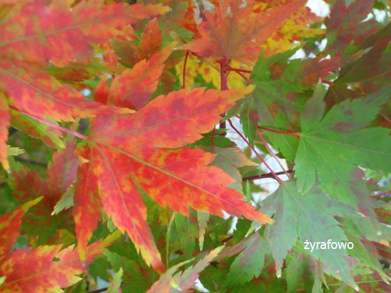 jesien 2011_20