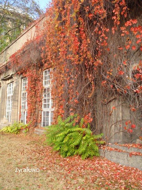 jesien 2011_08