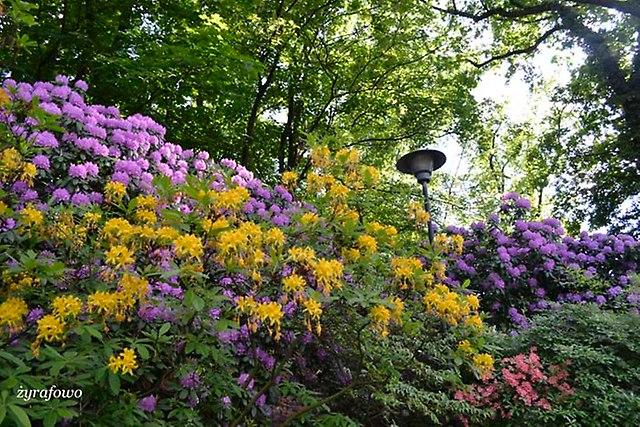 Ogrod Botaniczny_16